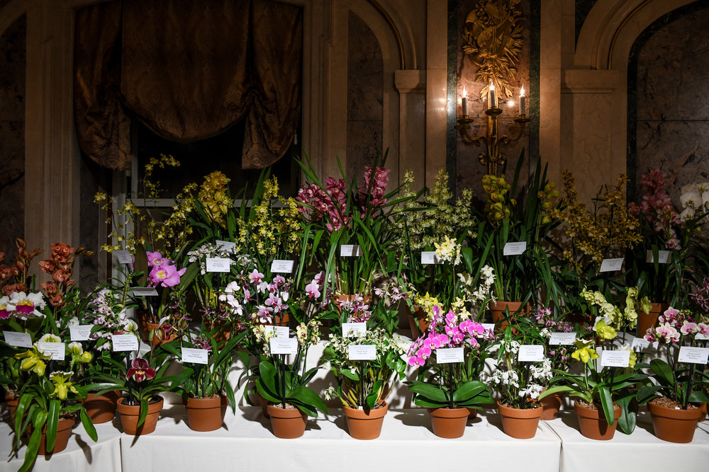 Orchids auctioned at the event. Photo: Zach Hilty/BFA.com